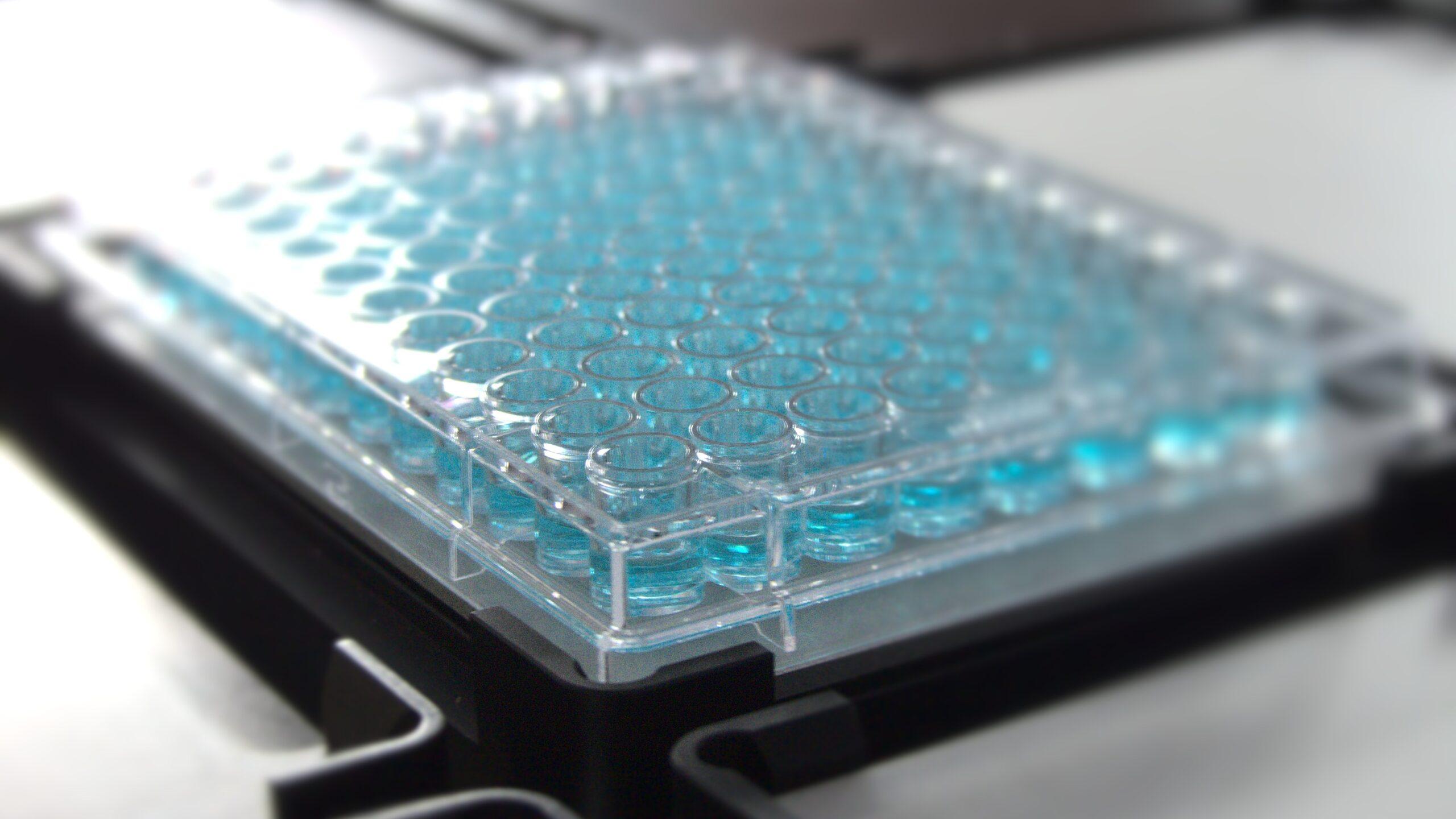 blurry plate - lab equipment
